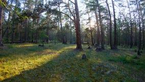 El caminar en el bosque almacen de video