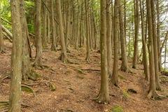 El caminar en el bosque profundo de los WI del condado de Door imágenes de archivo libres de regalías