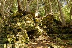 El caminar en el bosque profundo de WI del condado de Door - árboles que crecen en afloramiento de roca Fotos de archivo libres de regalías