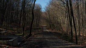 El caminar en el bosque