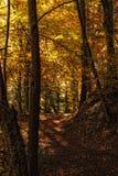 El caminar en el bosque Foto de archivo