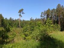 El caminar en el bosque Fotos de archivo libres de regalías