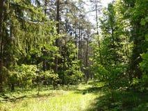El caminar en el bosque Fotografía de archivo libre de regalías
