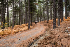 El caminar en el bosque en otoño Foto de archivo