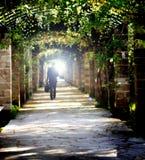 El caminar en el camino Fotografía de archivo libre de regalías