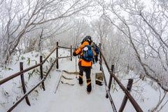 El caminar en el invierno con mucha niebla landscap de las montañas del invierno Fotos de archivo