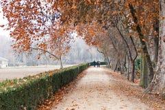 El caminar en el parque en un día de niebla del otoño Fotos de archivo libres de regalías