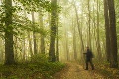 El caminar en foresrt Imagen de archivo libre de regalías