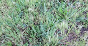 El caminar en la alta hierba metrajes