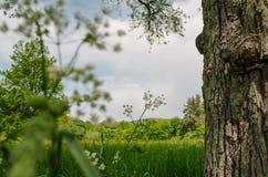 El caminar en la naturaleza reservada de la primavera es inestimable Imagen de archivo