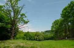 El caminar en la naturaleza reservada de la primavera es inestimable Imagen de archivo libre de regalías