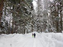 El caminar en la reserva de naturaleza en Dombay Foto de archivo