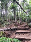 El caminar en las montañas blancas en New Hampshire Imagen de archivo libre de regalías