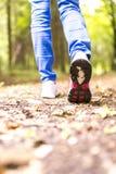 El caminar en naturaleza Foto de archivo