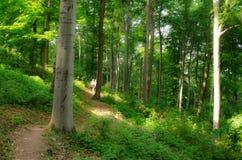 El caminar en naturaleza para ver el mundo Fotografía de archivo