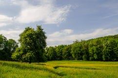 El caminar en naturaleza para ver el mundo Fotos de archivo libres de regalías