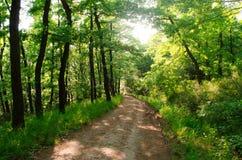 El caminar en naturaleza para ver el mundo Imagen de archivo libre de regalías