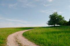 El caminar en naturaleza para ver el mundo Fotografía de archivo libre de regalías