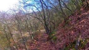 El caminar en un bosque cerca del lago almacen de video