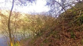 El caminar en un bosque en la montaña almacen de video