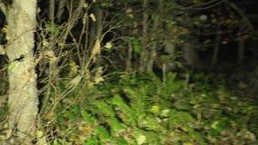 El caminar en un bosque oscuro extraño con niebla almacen de video