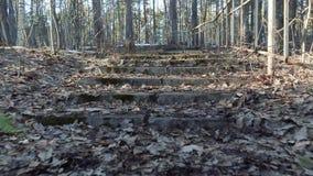 El caminar encima de las escaleras viejas en un parque asustadizo del otoño metrajes