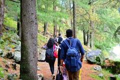 El caminar entre el bosque Imágenes de archivo libres de regalías