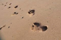 El caminar humano en una playa Imágenes de archivo libres de regalías