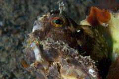El caminar invertebrado de Trapania en la esponja Fotografía de archivo libre de regalías