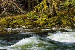 El caminar a lo largo de Salmon River Mt Hood National Forest Fotos de archivo libres de regalías