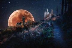 El caminar sabio en claro de luna debajo del cielo estrellado foto de archivo libre de regalías