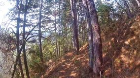 El caminar a través de árboles en un bosque almacen de video