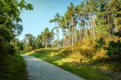 El caminar a través de los bosques de la isla de Wadden de Schiermonnikoog Fotografía de archivo libre de regalías