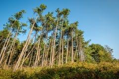 El caminar a través de los bosques de la isla de Wadden de Schiermonnikoog Fotos de archivo libres de regalías