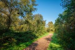 El caminar a través de los bosques de la isla de Wadden de Schiermonnikoog Imágenes de archivo libres de regalías