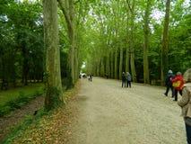 El caminar a través del bosque al castillo fotografía de archivo