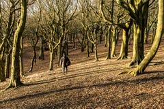 El caminar a través del bosque en la colina de Tandle Foto de archivo libre de regalías