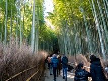 El caminar turístico en el bosque de bambú fotos de archivo