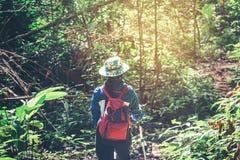 El caminar turístico joven y backpacker de la mujer en Forest Travel concentrado Imágenes de archivo libres de regalías