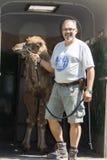 El caminar Two-humped del camello (bactrianus del Camelus) Fotos de archivo libres de regalías