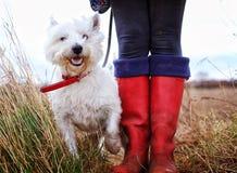 El caminar y Wellies del perro Imágenes de archivo libres de regalías