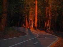 El camino al bosque rojo Foto de archivo
