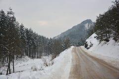 El camino al lado de los bosques densos cubiertos con nieve Fotos de archivo libres de regalías