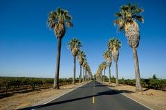 El camino alineó en palmeras Imagen de archivo libre de regalías