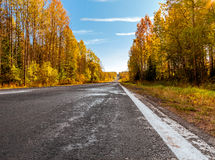 El camino asfaltado que pasa a través de una madera del otoño Fotos de archivo libres de regalías