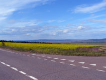 El camino asfaltado y el campo de flores amarillas imagen de archivo libre de regalías