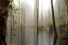El camino bordea el bosque Imagenes de archivo