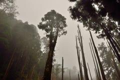 El camino bordea el bosque Imagen de archivo