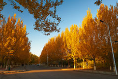 El camino con puesta del sol de los árboles del otoño Fotografía de archivo libre de regalías