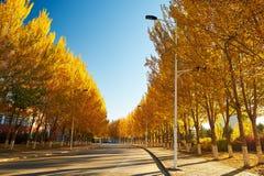 El camino con salida del sol de los árboles del otoño Fotografía de archivo